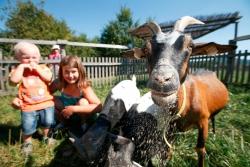 Dopřejte si rodinný výlet na Farmu Blaník s volným vstupem do zábavního areálu